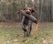 Firedog Wild Dummy Fazant 1800 Gram
